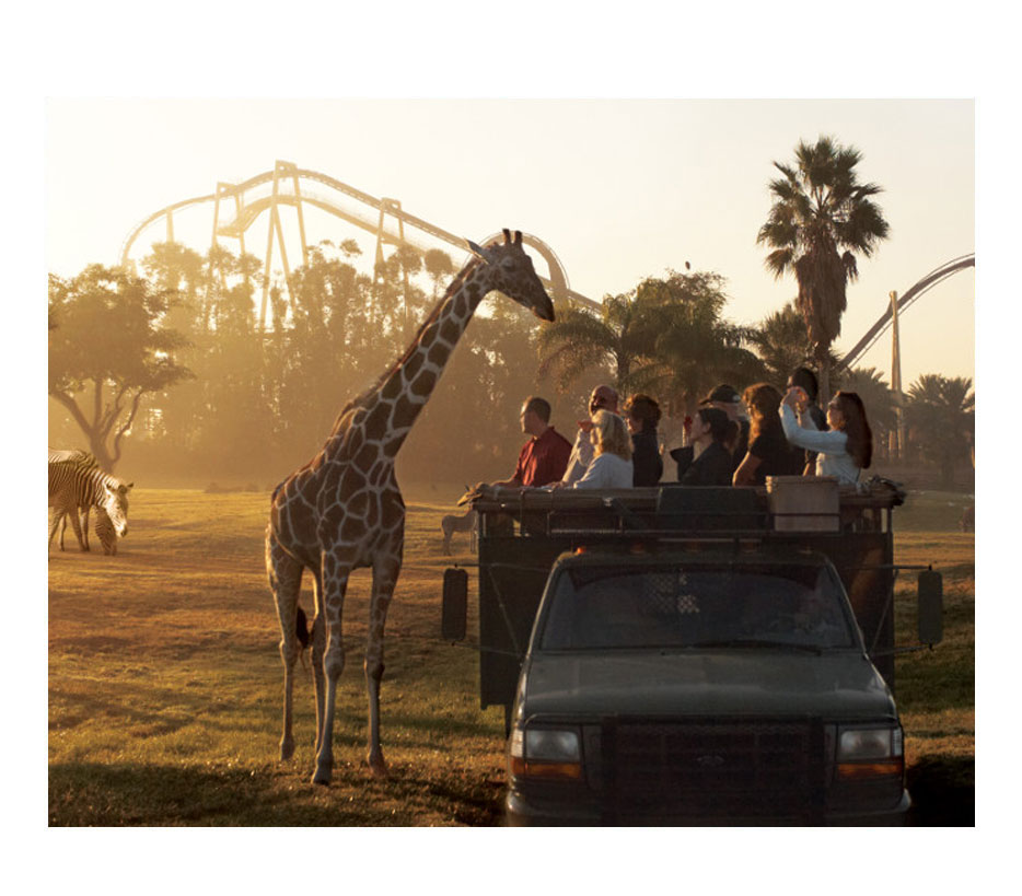 click here to buy busch gardens tampa bay tickets online now