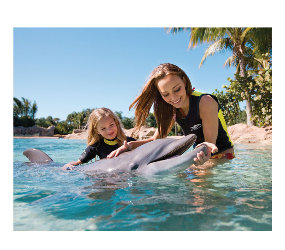 click here to contact us now to find a discovery cove package