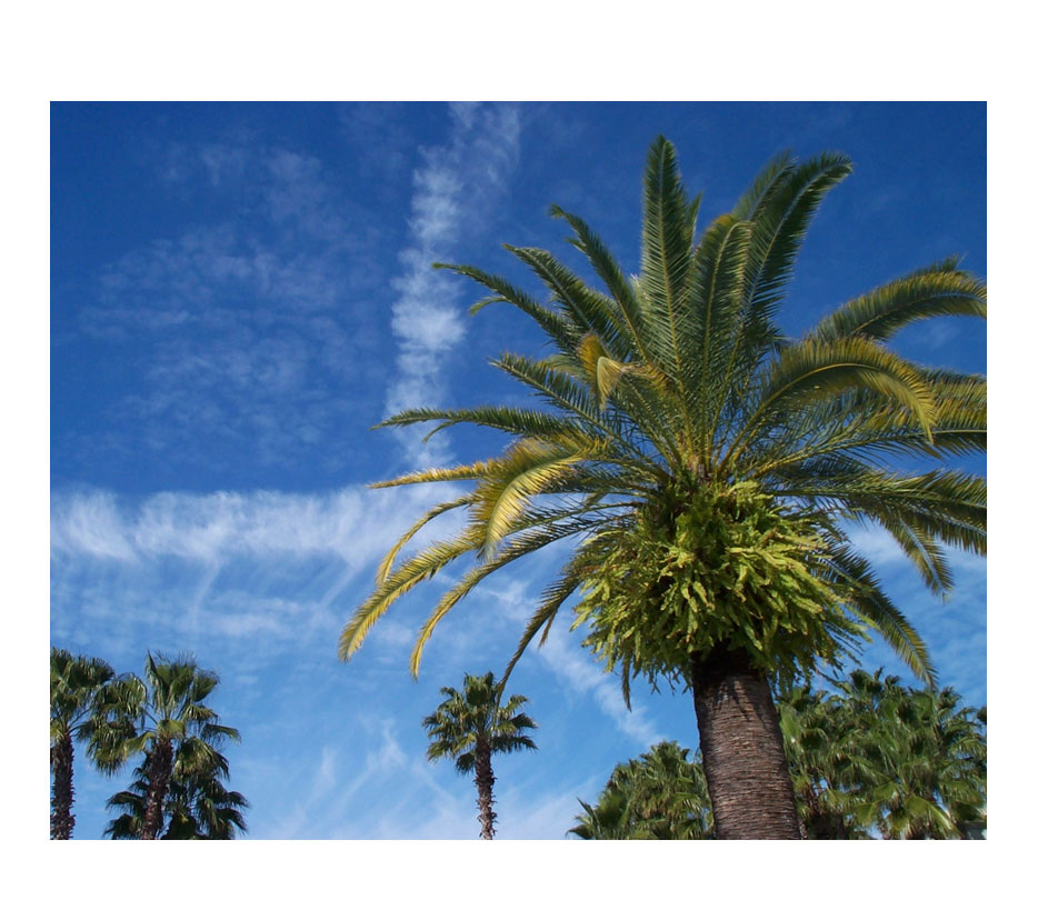 image of palm tree with blue sky in warmer climate